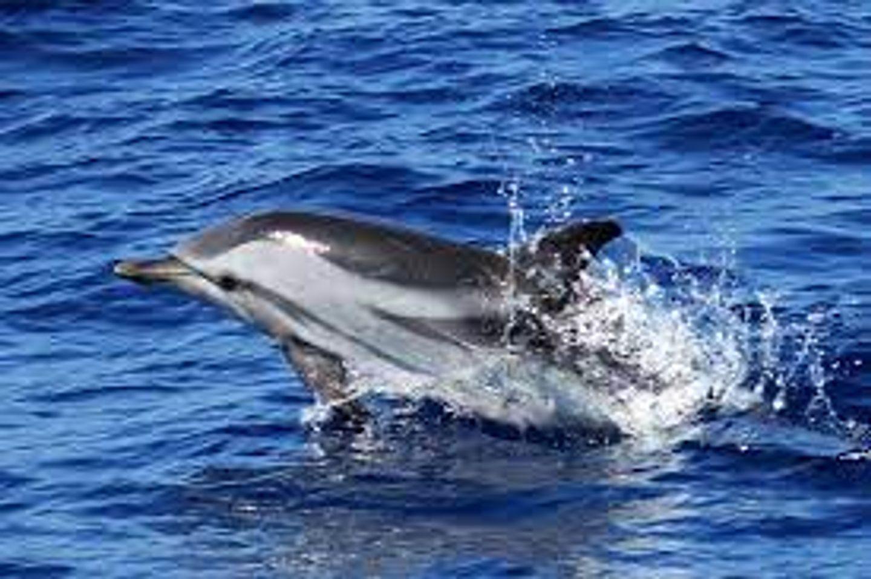 [ CULTURE/LOISIR ] Venez observer des baleines et des dauphins dans la Méditerranée ...
