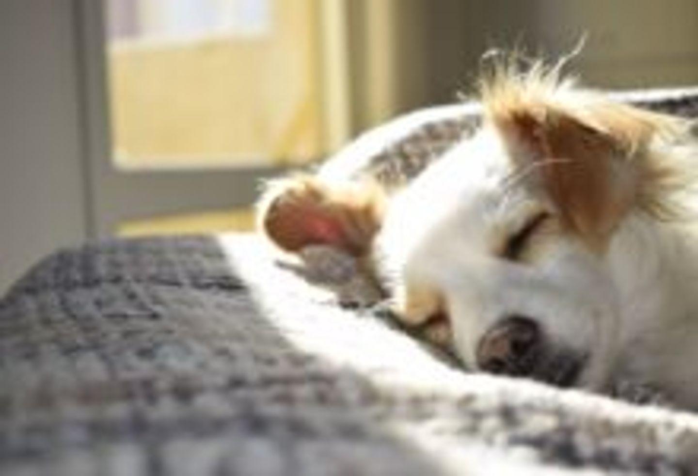 [ SOLIDARITE ] GARD Royal Canin lance un programme d'adoption d'animaux de compagnie dans les EHPAD