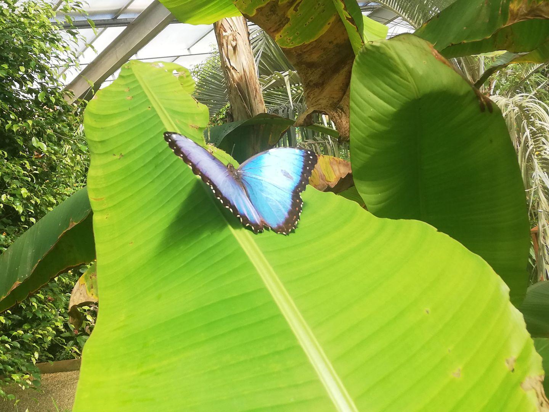 Carte Postale : L'île aux papillons de Noirmoutier