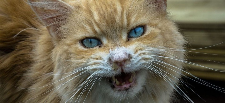 Un chat oblige un avion à effectuer un atterrissage d'urgence !
