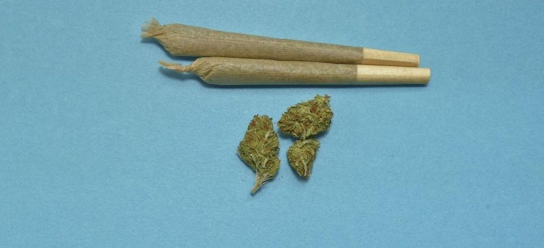 Cannabis : la députée du Loiret Caroline Janvier prône une «...