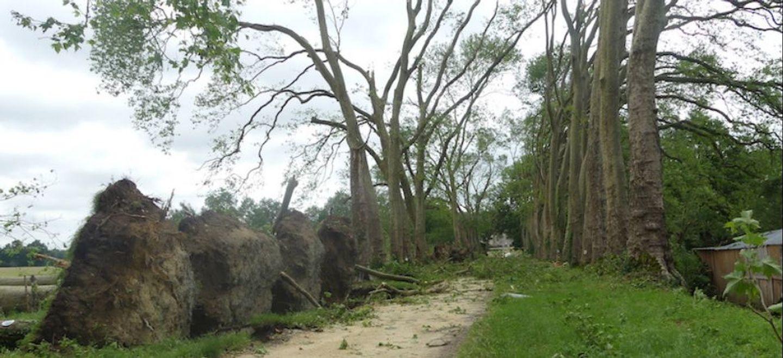 Indre-et-Loire : l'allée de platanes du Château de Gizeux détruite