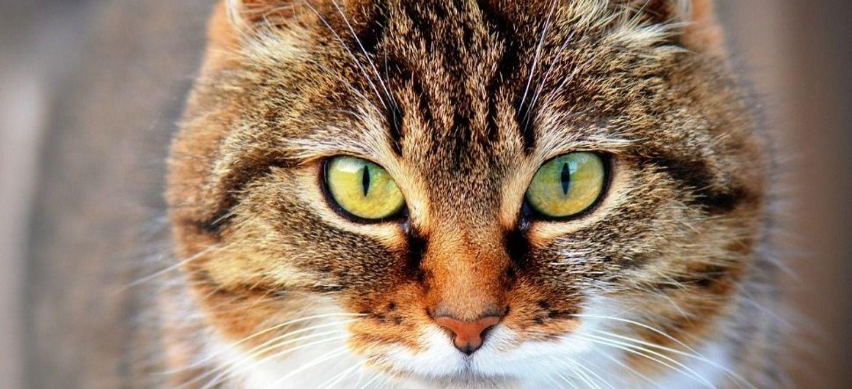 Leur chat, qu'ils croyaient avoir incinéré, revient chez eux vivant