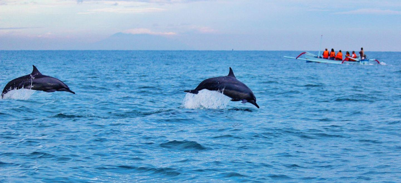 Six dauphins échoués sur les plages de Charente-Maritime (photos)