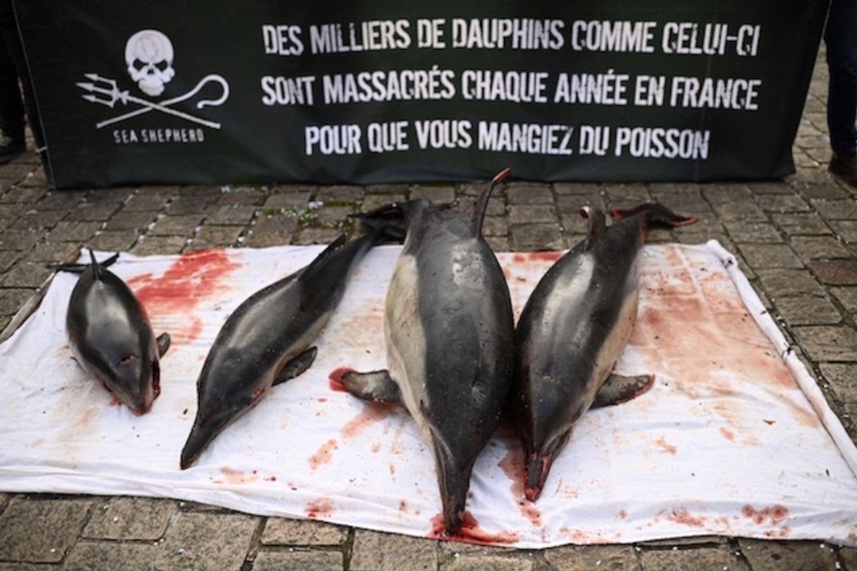 Côte Atlantique : trop de dauphins retrouvés échoués