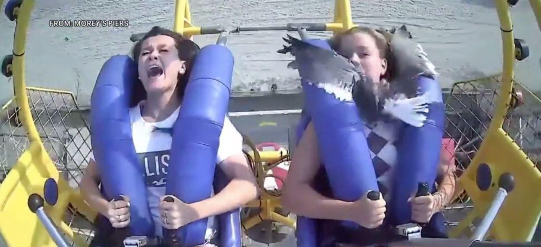 Une adolescente heurtée par une mouette dans une attraction à...