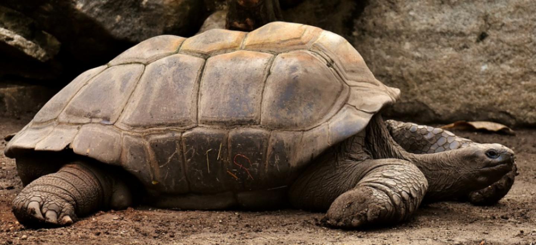 Charente-Maritime: des tortues saisies dans le département ont...