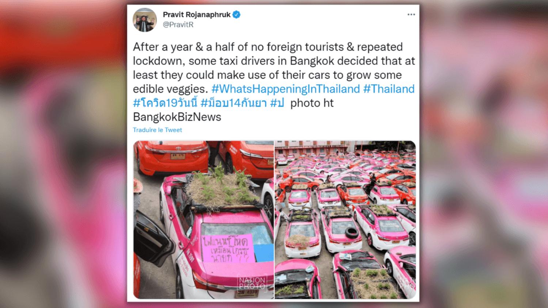 Des taxis transformés en jardins potagers à cause de la pandémie