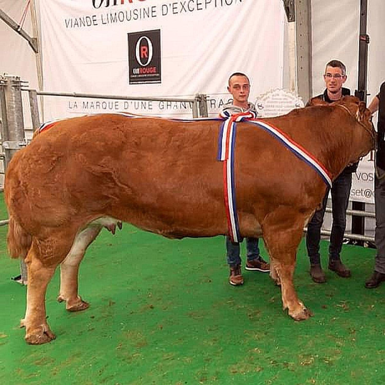 Une vache à 34.000 euros