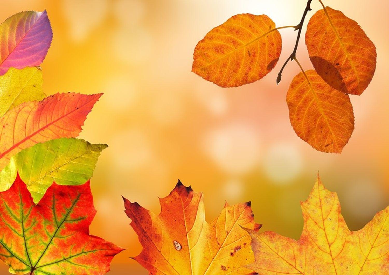 [ SOCIETE/LOISIRS ]: A Arles, on prépare déjà les vacances d'automne
