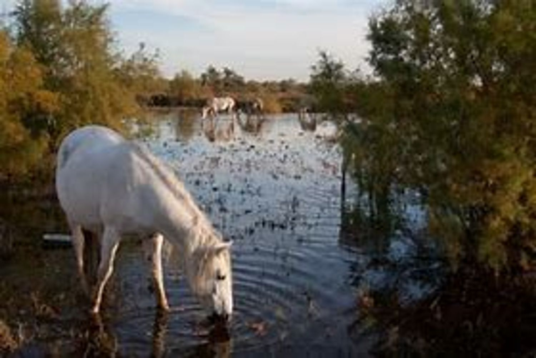[ ENVIRONNEMENT ]:  En Camargue, se servir de la bio masse pour créer soit du gaz soit du digestat