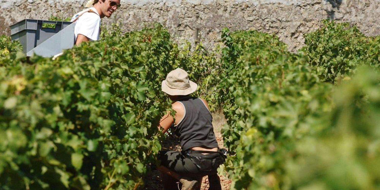 [ SOCIETE ]: La communauté des terre de Camargue, se mobilise pour redynamiser la filière viticole