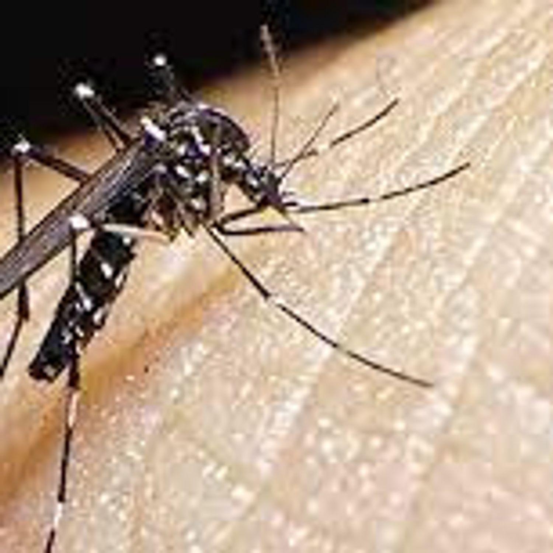 [ ENVIRONNEMENT ] Stop aux invasions des moustiques !