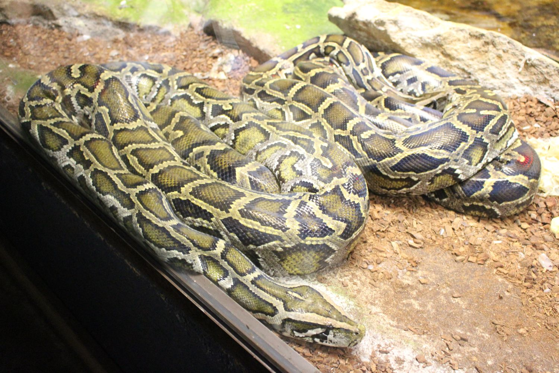 Un serpent au Zoo d'Amnéville