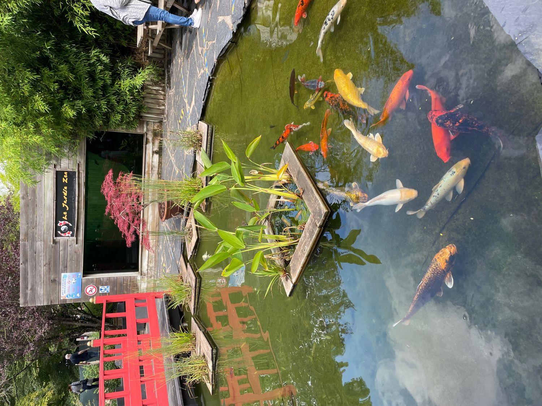 Plongez dans un monde incroyable à l'Aquarium d'Amnéville