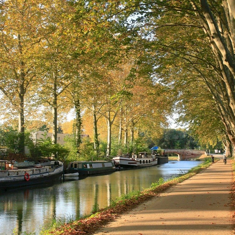 Toulouse : une palette végétale pour protéger le patrimoine arboré