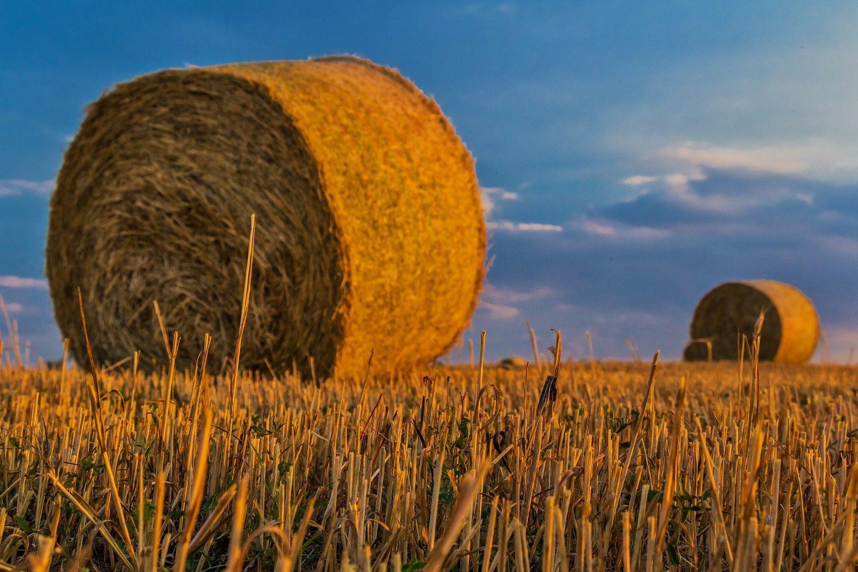 Le champ d'un agriculteur.
