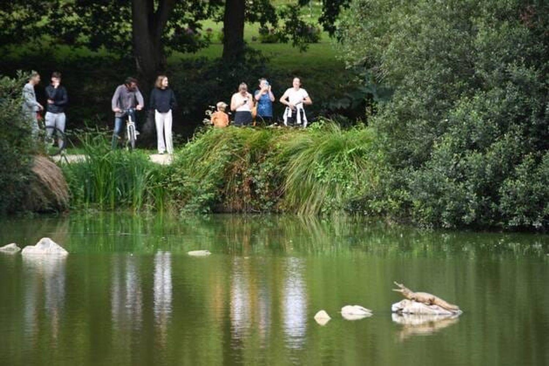 Le crocodile sur son rocher