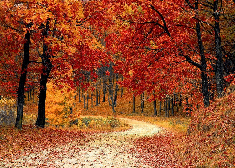 Le retour de l'automne