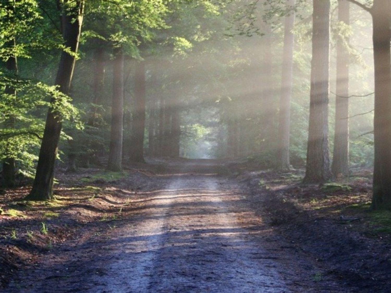Le « violeur de la forêt de Sénart » rejugé en appel