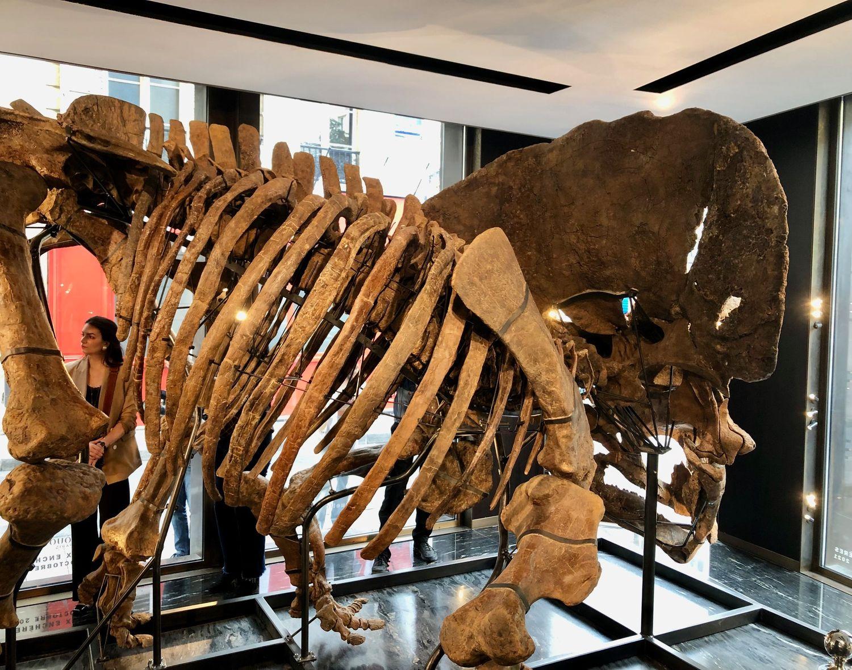 Le tricératops est exposé rue des archives, dans le quartier du Marais.