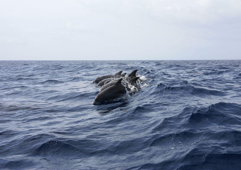 Sur les 17 dauphins échoués, 14 ont été secourus.