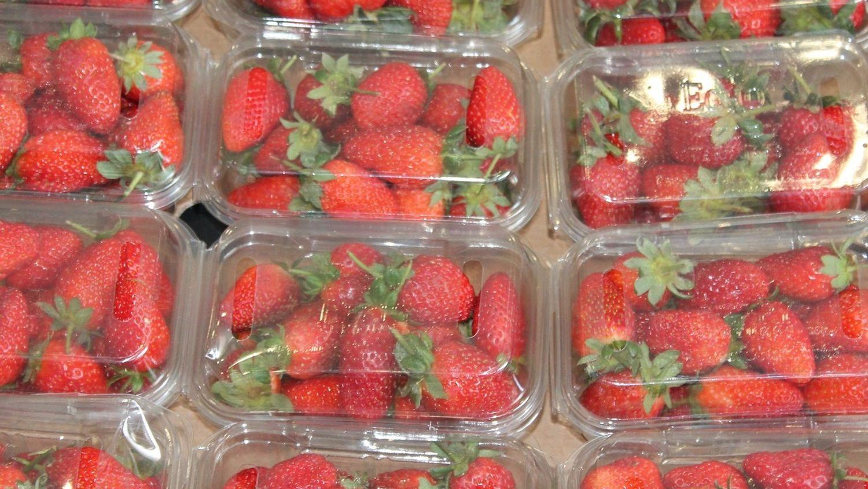fraises en barquettes plastique