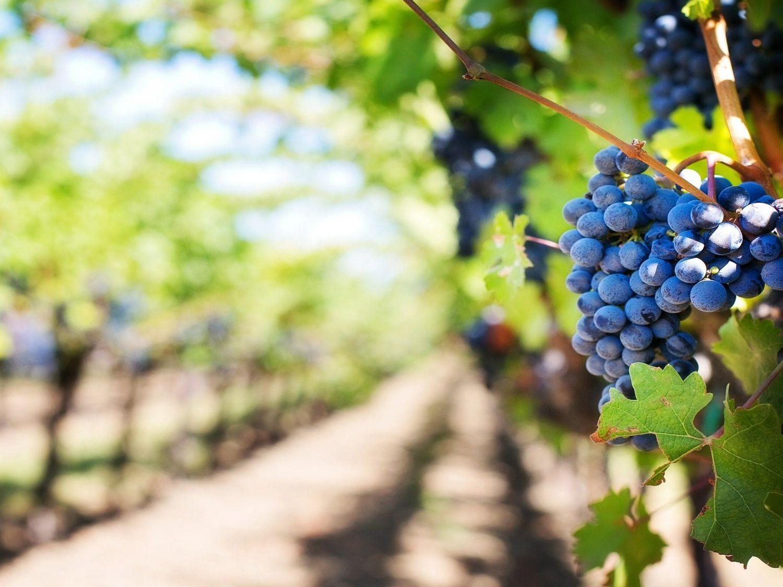 Nouvelle-Aquitaine : le monde agricole veut s'adapter aux aléas...