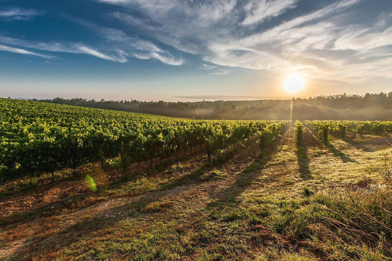 L'AOC regroupe une trentaine de vignerons.