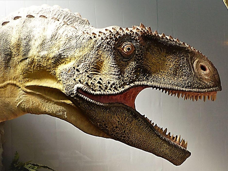 Le musée du Dinosaure d'Espéraza, dans l'Aude.