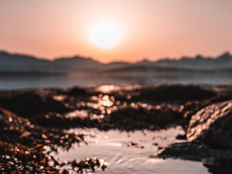 6000 m³ d'algues rouges échouées sur les plages de...