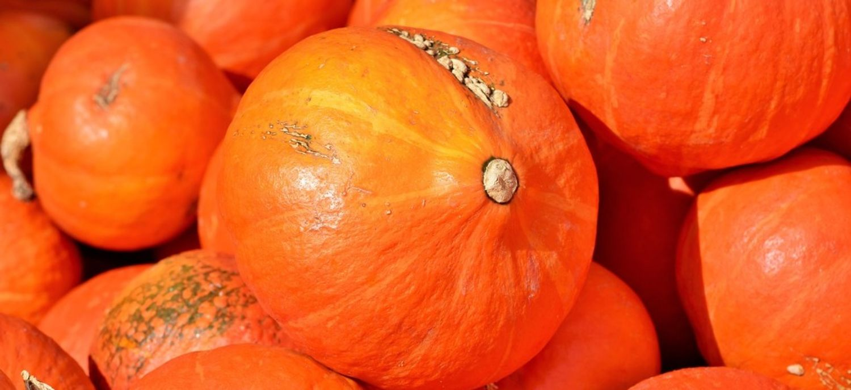 10 millions de tonnes de nourriture sont gaspillées chaque année en France.