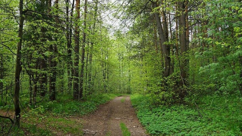 Viols en série en forêt de Sénart : l'accusé condamné à 20 ans de...
