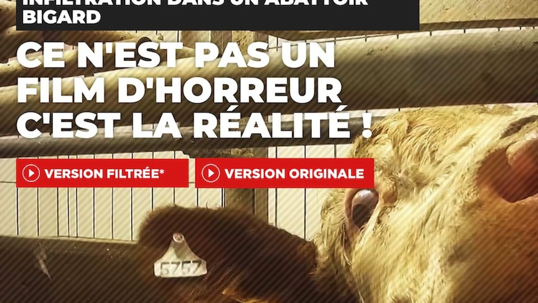 L'abattoir Bigard de Cuiseaux épinglé par L214 : une enquête ouverte