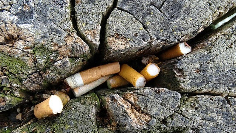 Environnement :près de 300.000 mégots ramassés à Toulouse, un...