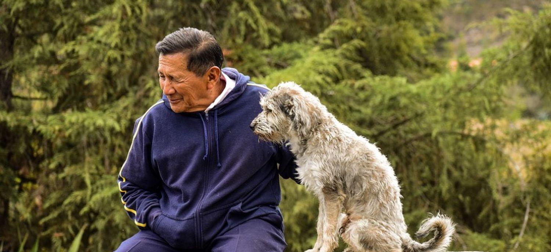 Médiation animale : des chiens pour aider les patients à aller mieux