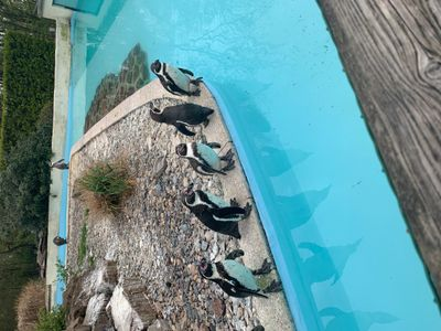 Suivez Le Guide - Zoo De Jurques
