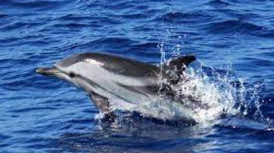 [ CULTURE/LOISIR ] Vous souhaitez observer des baleines et des...