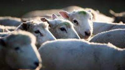 [ FAIT DIVERS ] Vol de bétails: Les éleveurs de Camargue attendent...