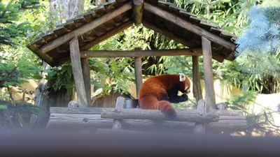 Gagnez vos entrées au Zoo d'Amnéville entre 12h et 13h