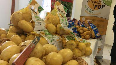 Les pommes de terre primeur sont arrivées malgré une météo qui...