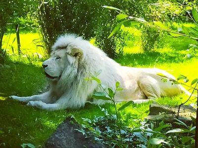 Pass sanitaire : Fréquentation divisée par deux pour le zoo de Jurques