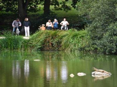 Des promeneurs surpris de voir un crocodile à Bourg-Blanc.