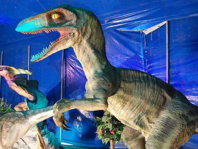 Les dinosaures se visitent en drive à Saint-Brieuc.