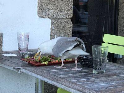 Pris le bec dans le plat à Concarneau.