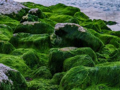 Algues vertes  : les agriculteurs se défendent