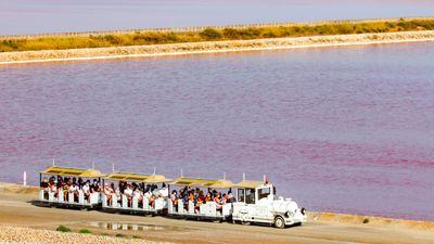 Gard : les multiples manières de visiter le salin d'Aigues-Mortes