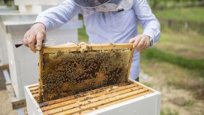 La première coopérative de miel d'Occitanie sera à Ortaffa