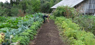 Le fort engouement pour le jardinage ne se dément pas