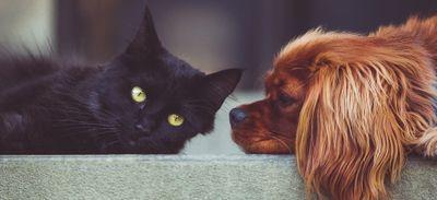 Une formation pour porter secours à son chat ou à son chien